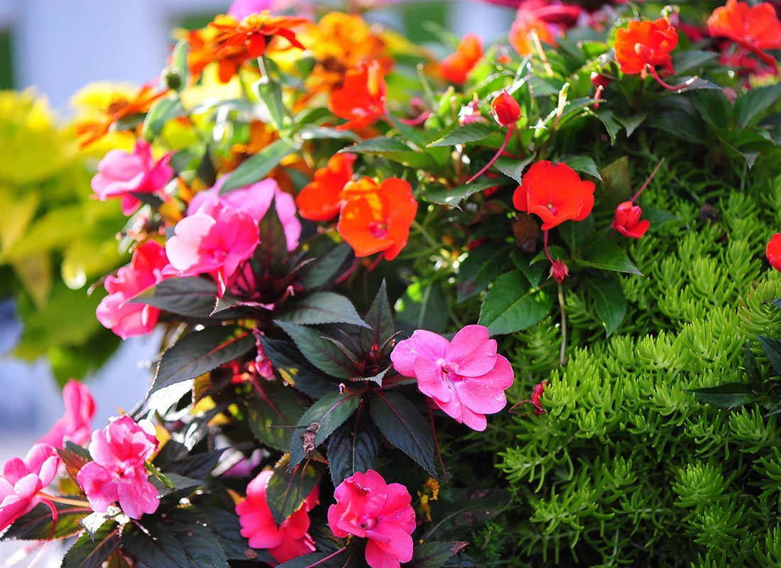 Pink and orange flowers