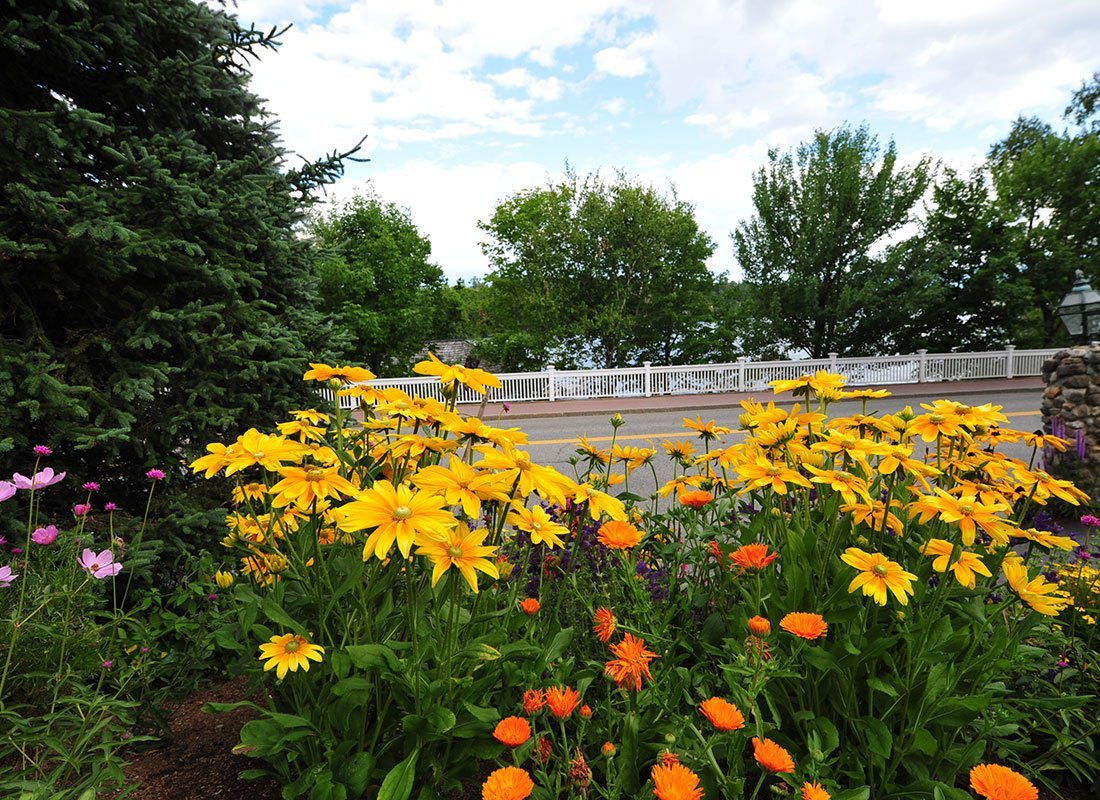 Flowers with roadway in background